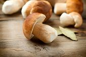 stock photo of edible mushrooms  - Mushroom Boletus over Wooden Background - JPG