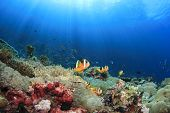 Anemones, Clownfish underwater on coral reef