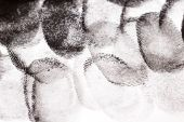 foto of dna fingerprinting  - Fingerprints with Black Ink on White Paper - JPG