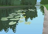 stock photo of dock a pond  - Yellow lilies in a pond on a background of dense forest - JPG