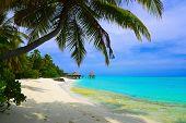 foto of kuramathi  - Water bungalows on beach of tropical island  - JPG