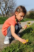 Girl picking daisies
