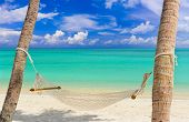picture of kuramathi  - Hammock on a tropical beach  - JPG