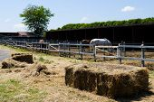 pic of thoroughbred  - a manege of horses with some thoroughbreds - JPG