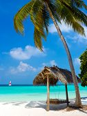 picture of kuramathi  - Swing on a tropical beach  - JPG