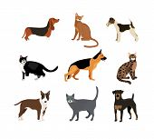 stock photo of bloodhound  - Cats and dogs vector illustration showing different breeds including a rottweiler  fox terrier  bloodhound   german shepherd and pitbull and different fur color in the cats - JPG