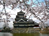 picture of shogun  - Beautiful Matsumoto castle during Sakura  - JPG
