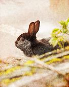 picture of rabbit hole  - Black rabbit with retro filter effect and vintage postcard style - JPG