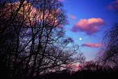 stock photo of full_moon  - Dramatic Evening Sky with Full Moon over Tree Branches