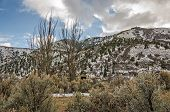 picture of sagebrush  - If you look on the right side of the tall tree on the right - JPG