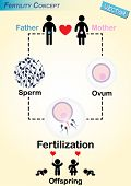 stock photo of intercourse  - Human Fertilization Diagram  - JPG