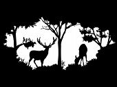 picture of deer  - black and white animal of wildlife  - JPG