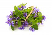 image of violets  - Violet flowers in basket - JPG