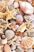 foto of scallop shell  - Background of pebbles different shells and starfishes - JPG