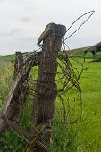 stock photo of barbed wire fence  - Barbed wire wound around a fence post Palouse Washington - JPG
