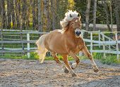 stock photo of brown horse  - Brown horse gallop on riding field in sunset - JPG