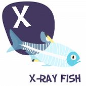 image of letter x  - Funny cartoon animals vector alphabet letter for kids from A to Z - JPG