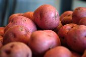 pic of solanum tuberosum  - Pile of raw red new potatoes against a blue gray background - JPG