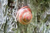 foto of mollusca  - Snails on wood in the summer garden  - JPG