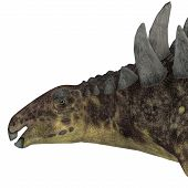 image of herbivorous  - Hungarosaurus was an ankylosaur herbivorous dinosaur that lived in Hungary during the Cretaceous Period - JPG