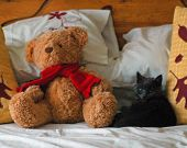 image of mating bears  - BLACK KITTEN ON BED WITH TEDDY BEAR - JPG