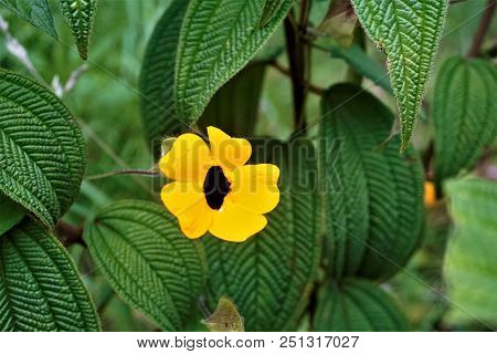 Blackeyed Susan Blossom Spotted In