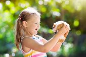 Child With Guinea Pig. Cavy Animal. Kids And Pets. poster