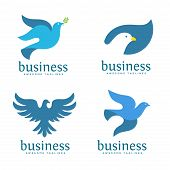 Dove Vector Logo Concept Illustration, Falcon Bird Logo, Animal Rescue Foundation , Flying Dove Logo poster