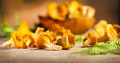 Raw wild chanterelles mushrooms on rustic background. Organic Fresh chanterelle on a table. Soft foc poster
