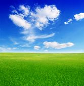Постер, плакат: поле зеленая трава и синее небо пасмурно