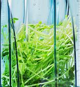Green Smoothie. Ingredients  For Green Smoothie In Blender Clouseup. Ingredients  Such As: Sprouts. poster