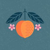 Peach Illustration. Ripe Peach With Leaves And Flowers On Shabby Background. Symmetrical Flat Compos poster
