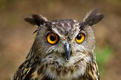 Owls Are Birds, Whic Live In Night. Owls Hunt Mostly Small Mammals, Insects, And Other Birds. poster