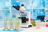 Grass end microscope in biological lab poster