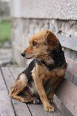 image of dog eye  - nice outdoor dog is resting at his place