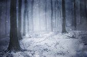 stock photo of fog  - Blizzard in a dark forest with fog in winter - JPG