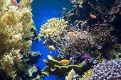 pic of coral reefs  - Underwater sea life in Oceanographic museum in Monaco  - JPG