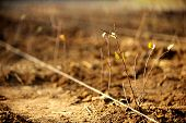 stock photo of afforestation  - Newly planted tree during a afforestation action - JPG