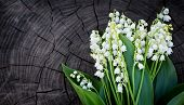 pic of lillies  - Lilly of the valley flowers on wooden texture - JPG