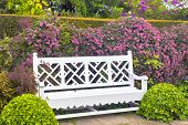 foto of english ivy  - Wooden garden bench with topiary shrubs and pink clematis - JPG