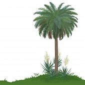 picture of naturalist  - Tropical palm tree with green leaves and plants Yucca - JPG