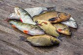 stock photo of chub  - Raw freshwater fish on the old wooden board - JPG