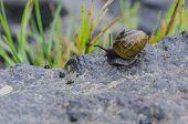 stock photo of creeping  - A small snail creeps along a rock along the Appalachian Trail - JPG