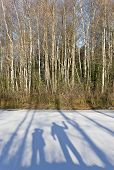 pic of diffraction  - Shadows of man and woman are on the frozen lake and forest in the background - JPG