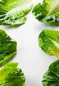 stock photo of romaine lettuce  - Romaine lettuce on white wooden board - JPG