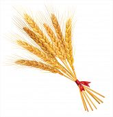 stock photo of fall-wheat  - Bunch of wheat on white  background - JPG