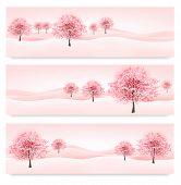 stock photo of sakura  - Three spring banners with blossoming sakura trees - JPG