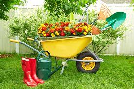 pic of spade  - Wheelbarrow with Gardening tools in the garden - JPG