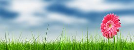 stock photo of nature conservation  - Concept or conceptual green fresh summer or spring grass field and a flower over a blue sky background - JPG