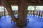 picture of tree house  - trunk of live tree coming through the floor and reaching up through the ceiling and roof of tree house with bench for sitting - JPG